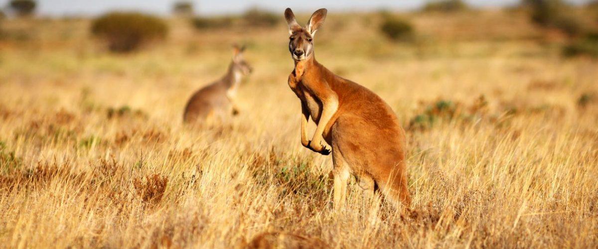 Será más largo el verano en Australia debido al cambio climático