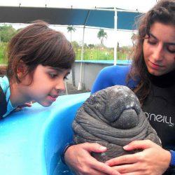 Rescatan cría de manatí en Centla, Tabasco