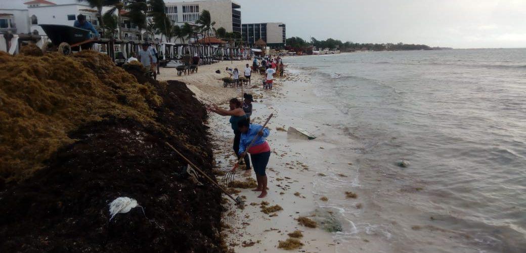 Declaran desiertas la licitaciones para recolección y contención del sargazo en Playa del Carmen
