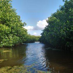 La importancia de la conservación de los manglares en México