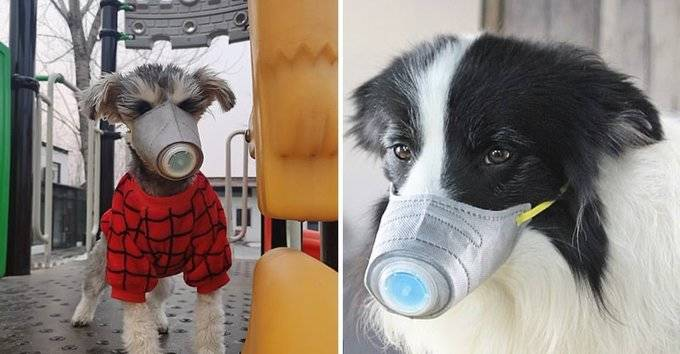 Mascotas domesticas no transmiten el coronavirus